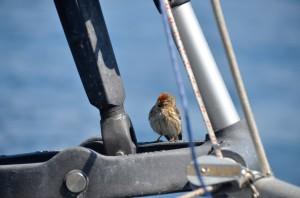 Our little stowaway friend.